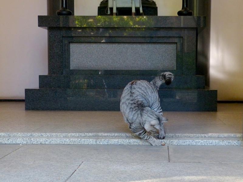 お堂前で遊んでるサバトラ猫1