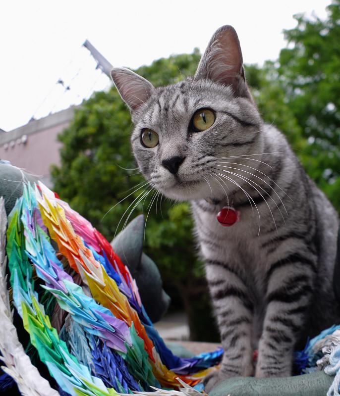供養碑のサバトラ猫1