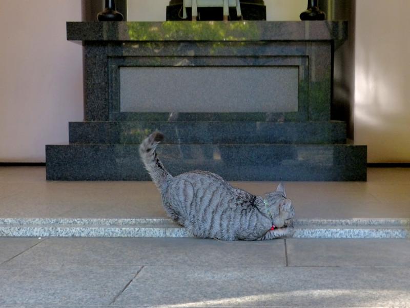 お堂前で遊んでるサバトラ猫2
