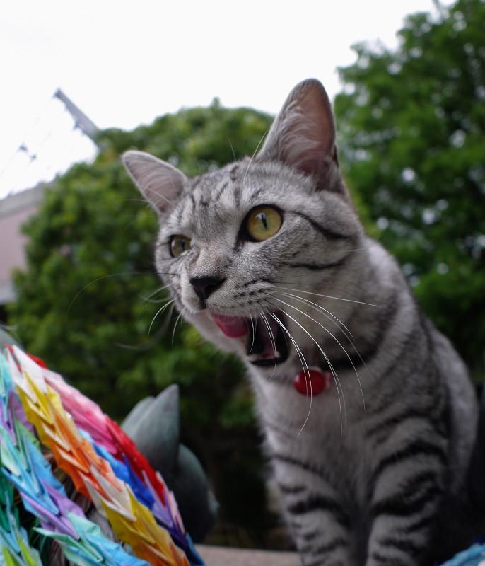 供養碑のサバトラ猫2