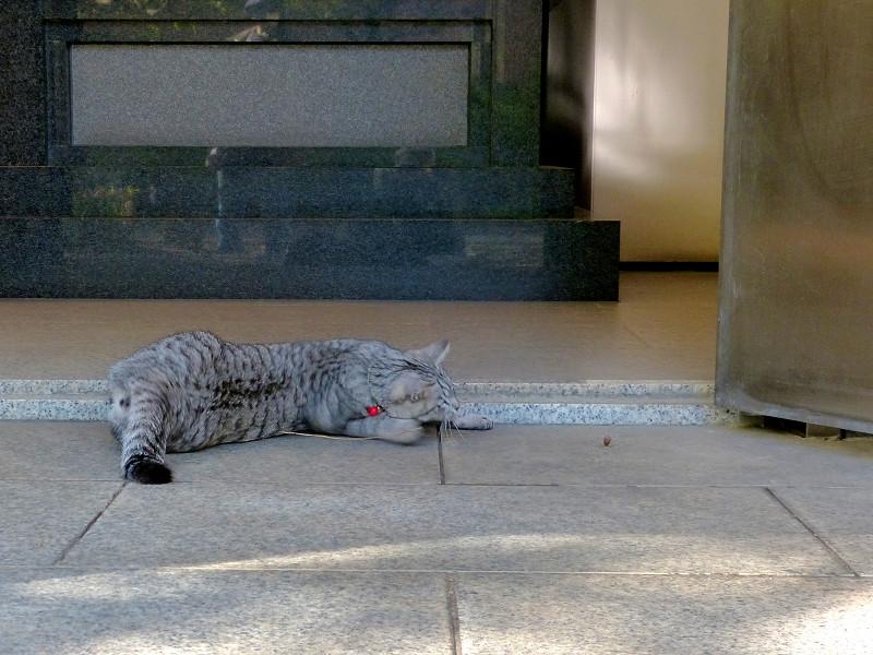 お堂前で遊んでるサバトラ猫3