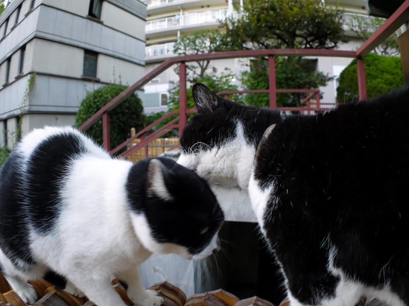 仲良しな義理姉妹猫3