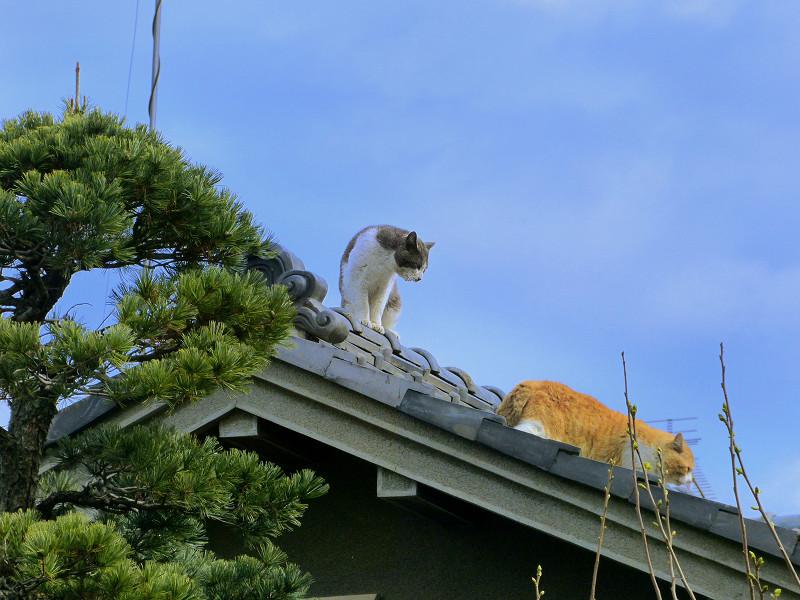 終わりを迎える屋根上の喧嘩1