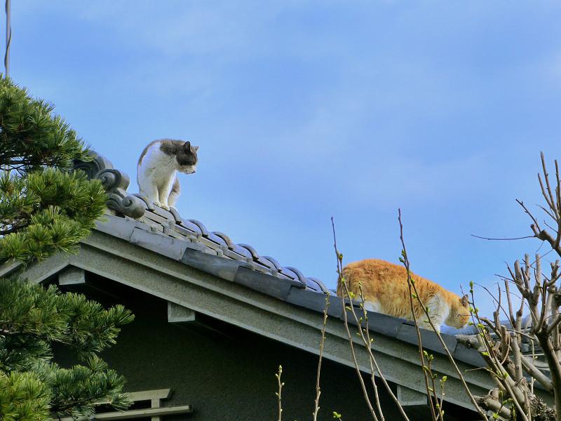 終わりを迎える屋根上の喧嘩2