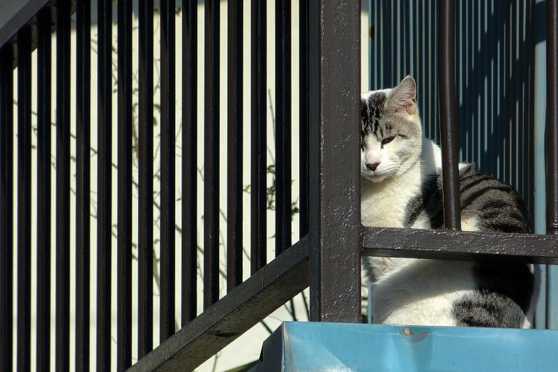 物干し台とグレー白猫2