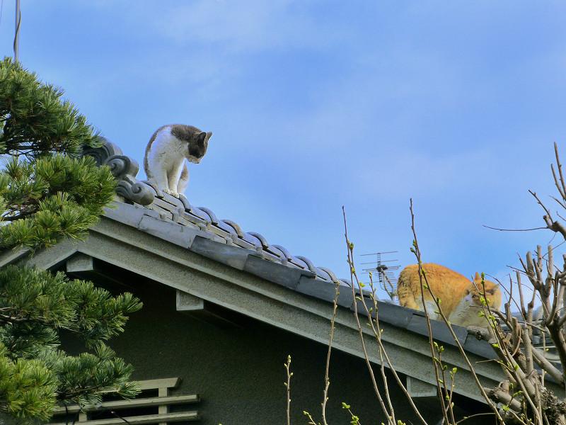終わりを迎える屋根上の喧嘩3