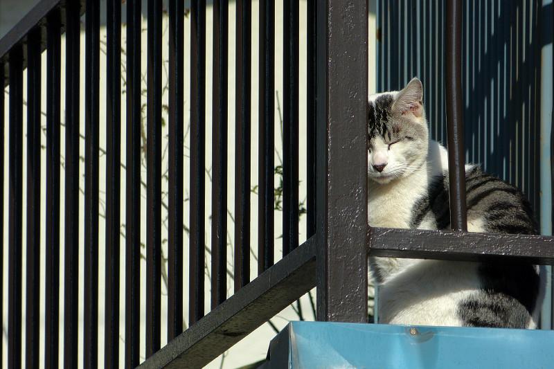 物干し台とグレー白猫3
