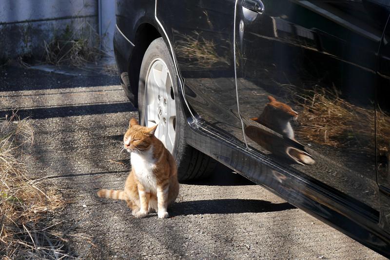 映り込みと茶白猫3