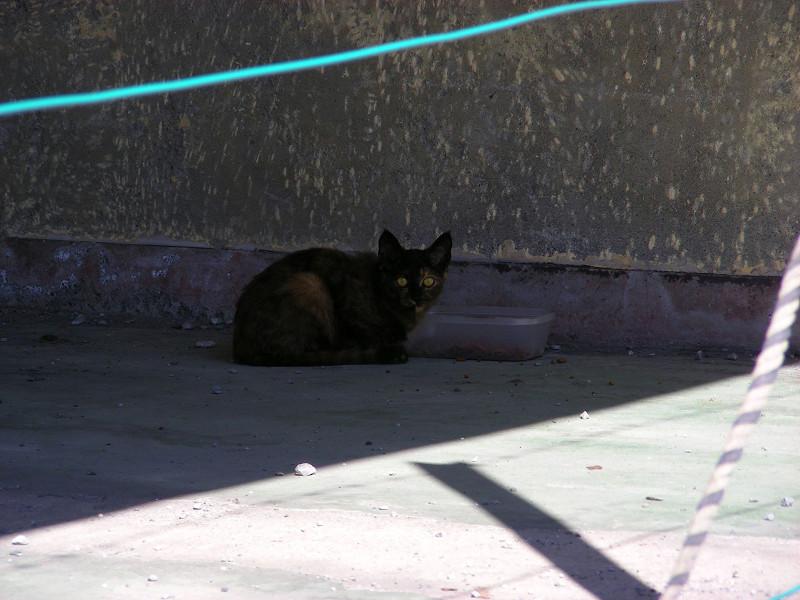 日陰のサビ柄猫1