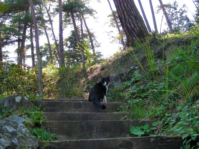 山道と黒白猫1