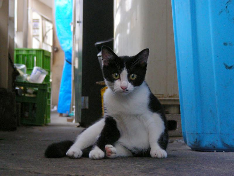 青いバケツと黒白猫2