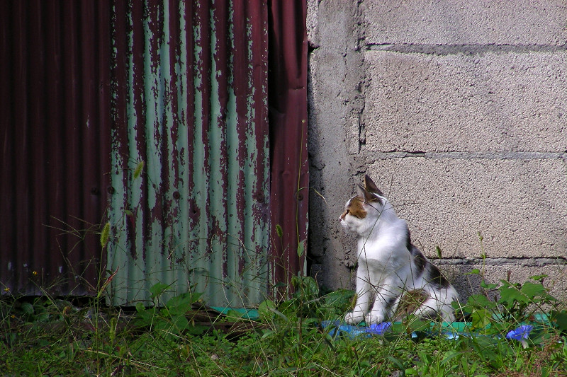 壁の前の猫2