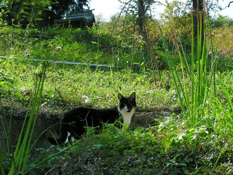 山道と黒白猫2