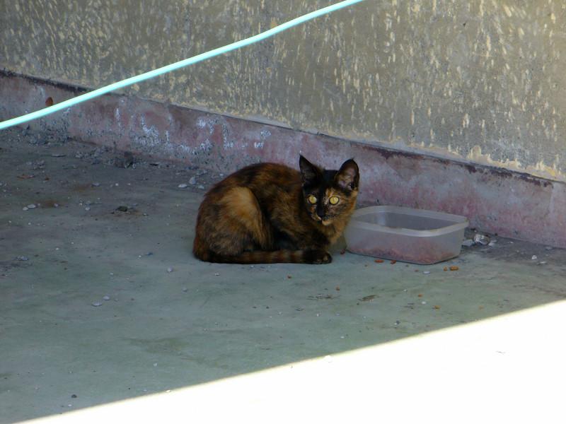 日陰のサビ柄猫2