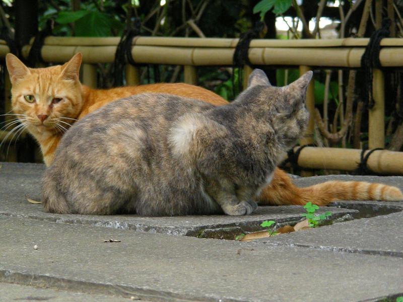 茶トラ猫と薄サビ猫3
