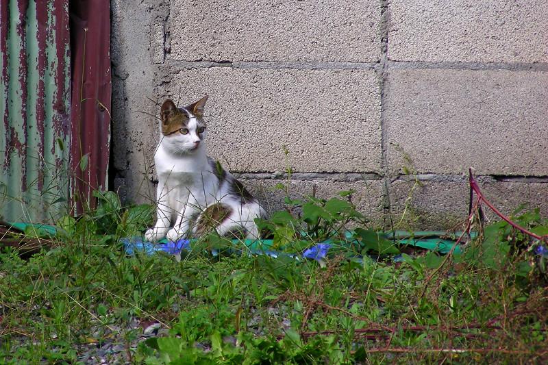 壁の前の猫3