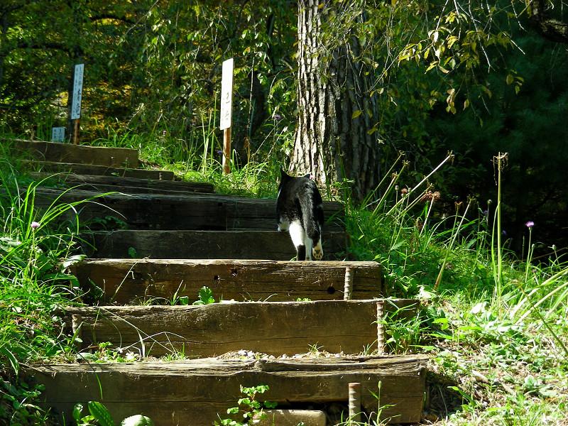 山道と黒白猫3