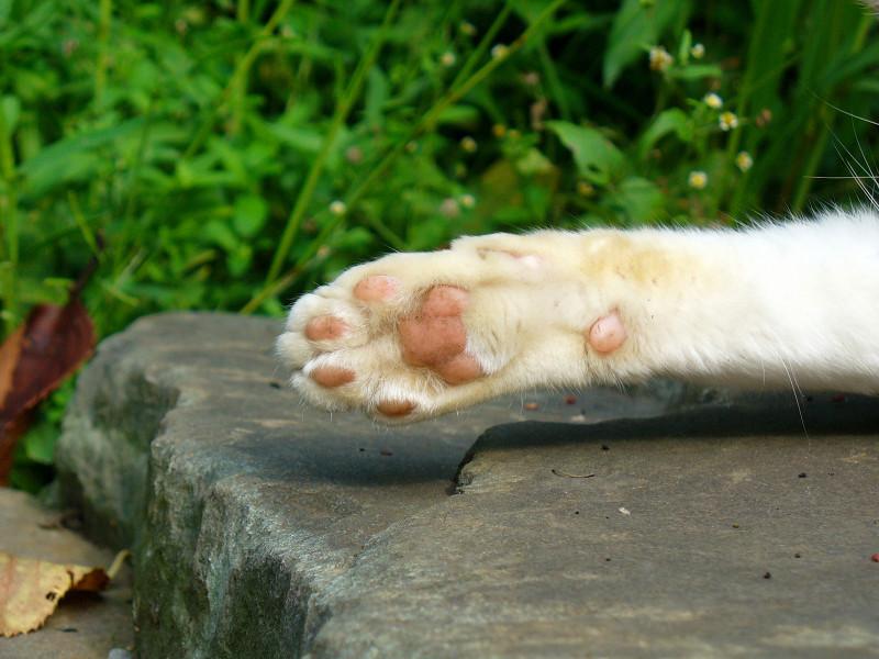 腕を伸ばして寝てる白猫3
