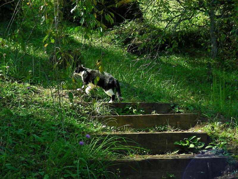 山道と黒白猫4