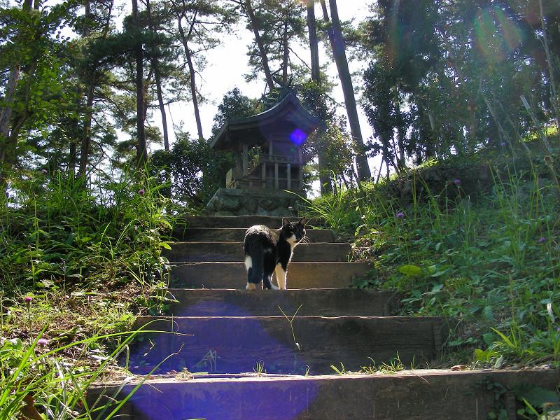 山道と黒白猫5