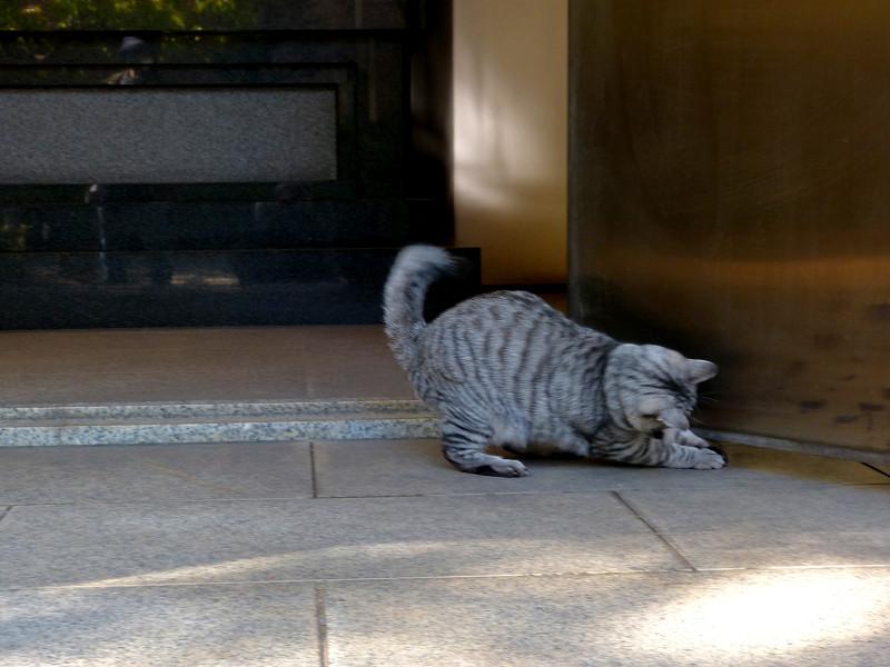 遊びまくるサバトラ猫1