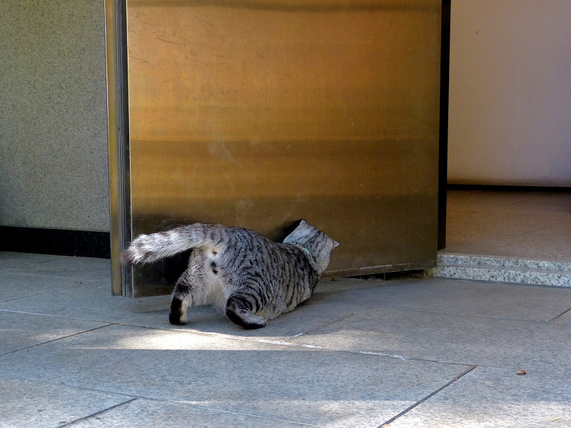 遊びまくるサバトラ猫3
