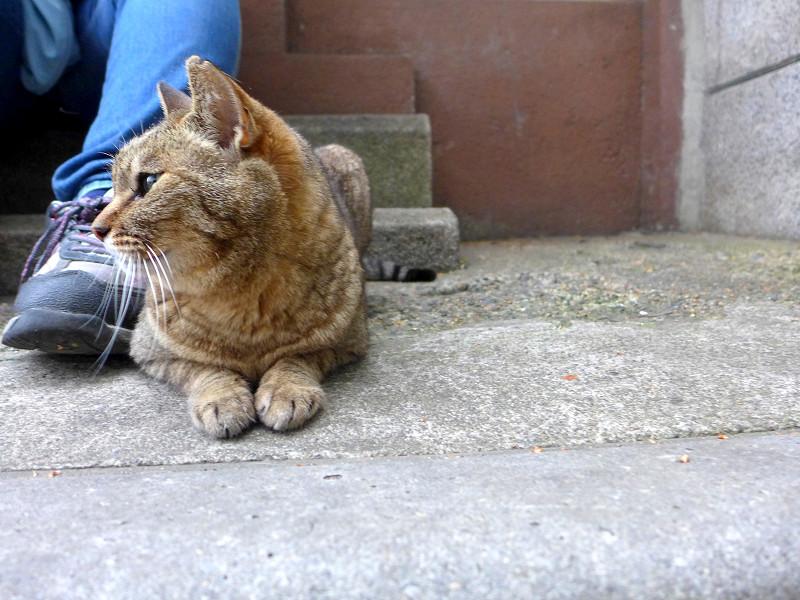 足先のキジトラ猫1