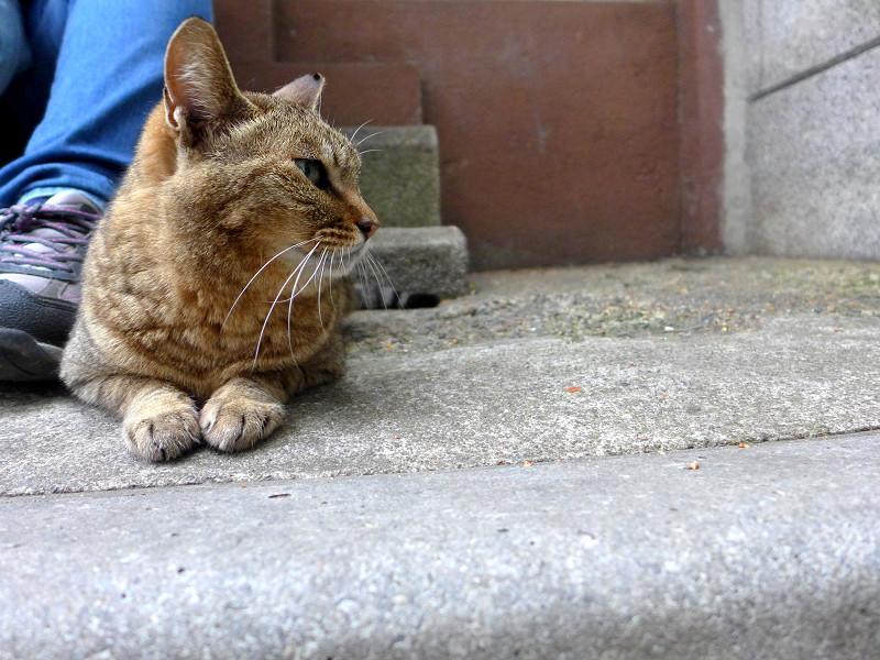 足先のキジトラ猫2