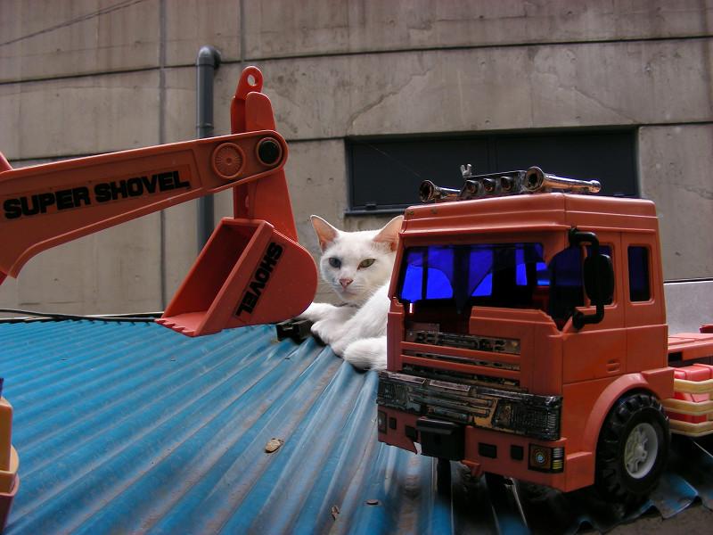 トラックのオモチャと白猫1
