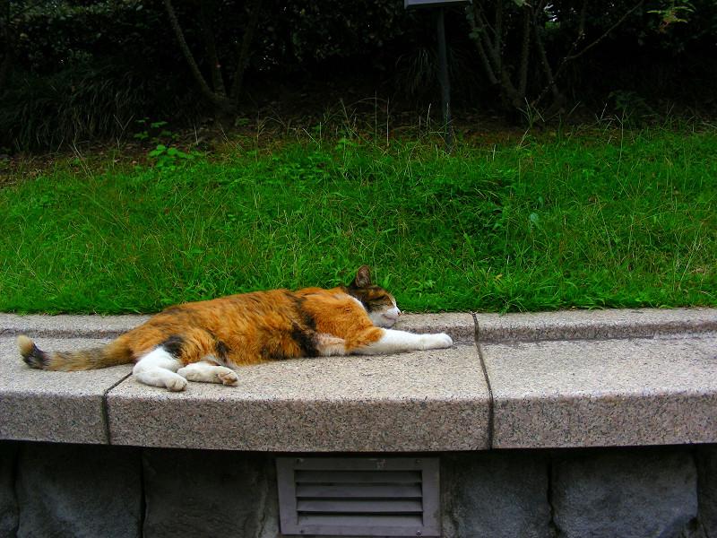 長いベンチで寝ている三毛猫1