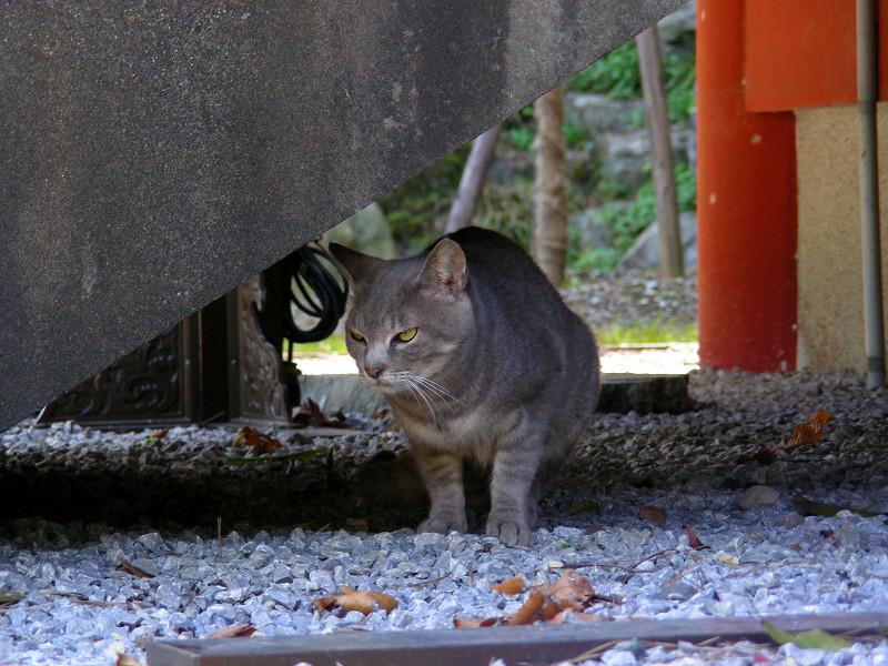 お堂の下とグレー猫