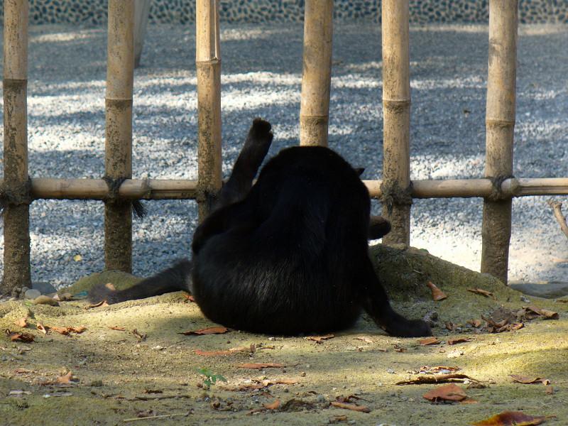 毛づくろいする黒猫1