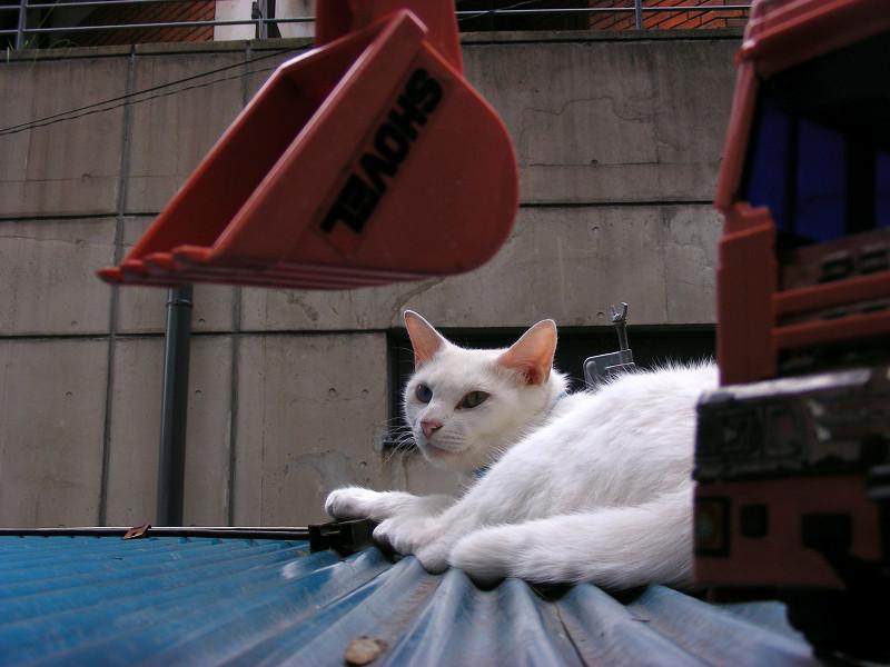 トラックのオモチャと白猫2