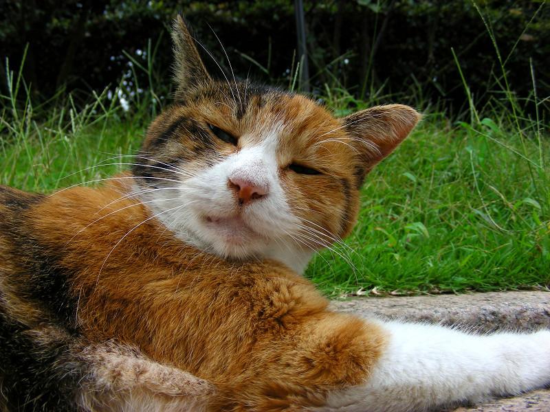 長いベンチで寝ている三毛猫2