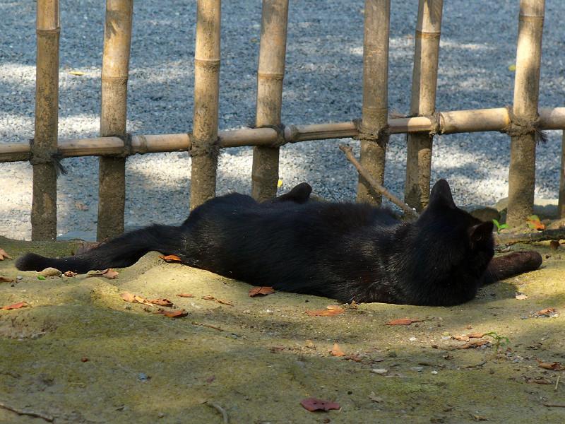 毛づくろいする黒猫2
