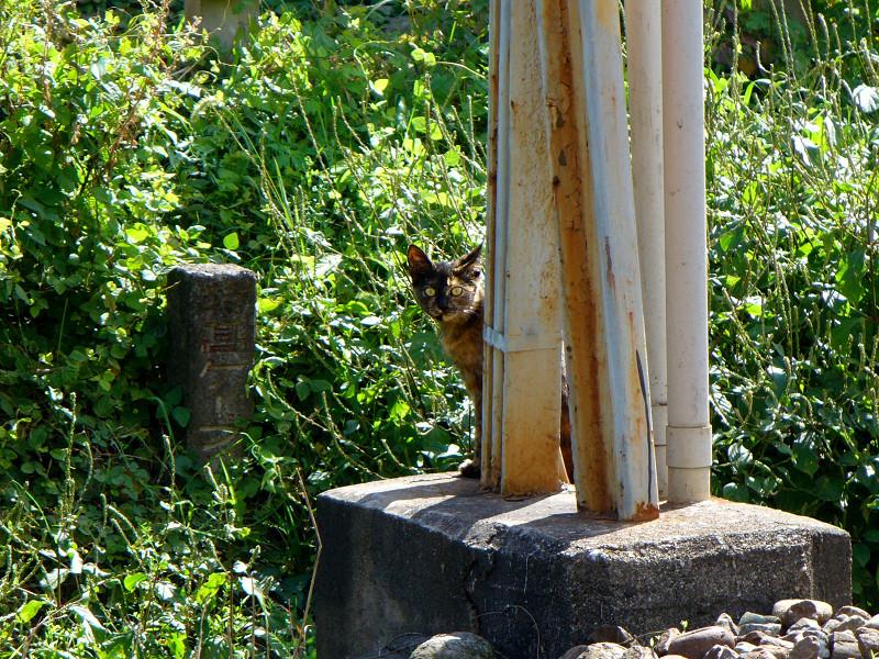 線路とサビ柄猫2