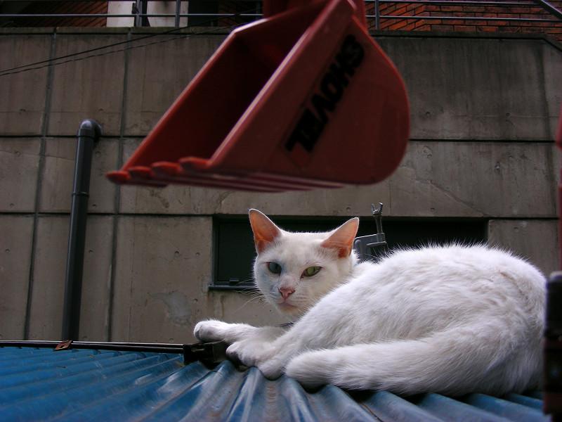 トラックのオモチャと白猫3