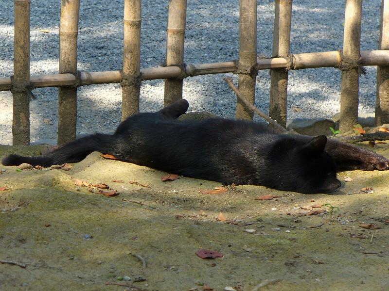 毛づくろいする黒猫3