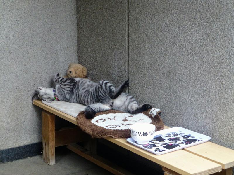 仰向けに寝ているサバトラ猫1
