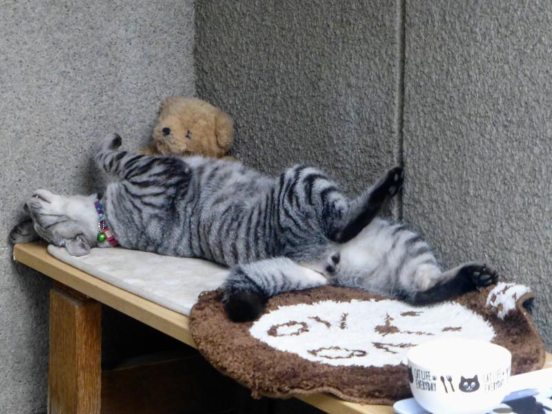 仰向けに寝ているサバトラ猫2