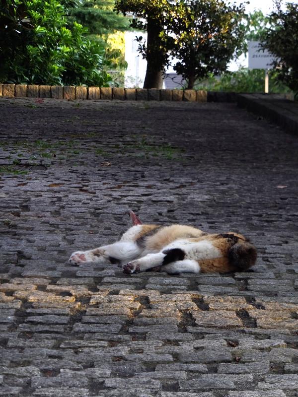 石畳で寝ている三毛猫1