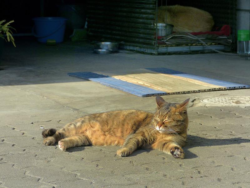 ガレージとサビ柄猫