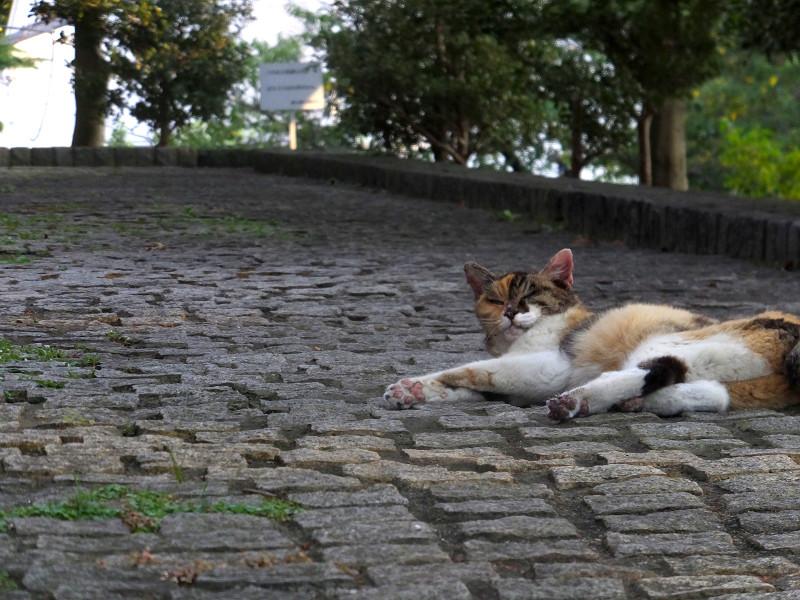 石畳で寝ている三毛猫3