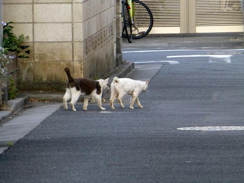 路地の猫たち1