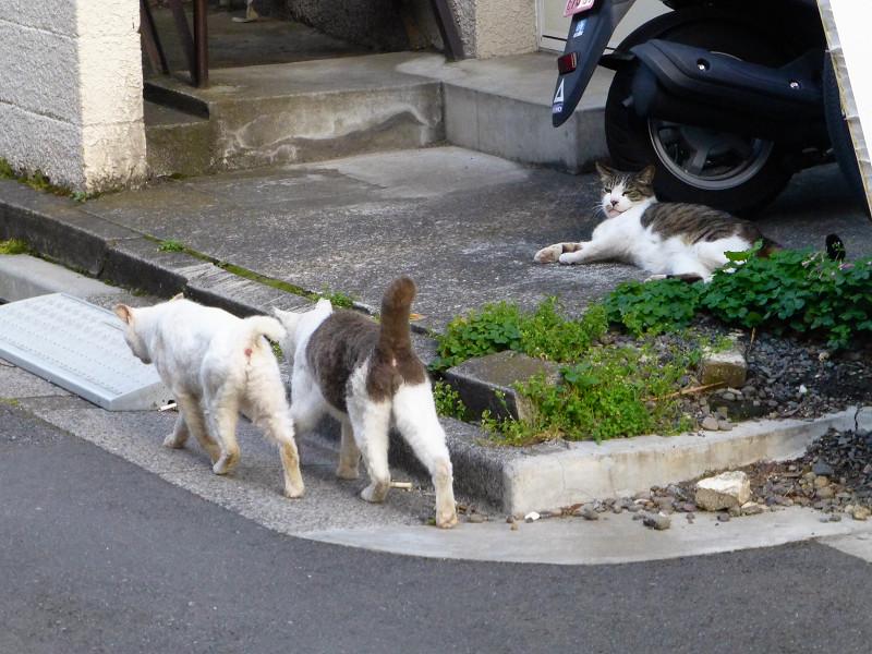 路地の猫たち2