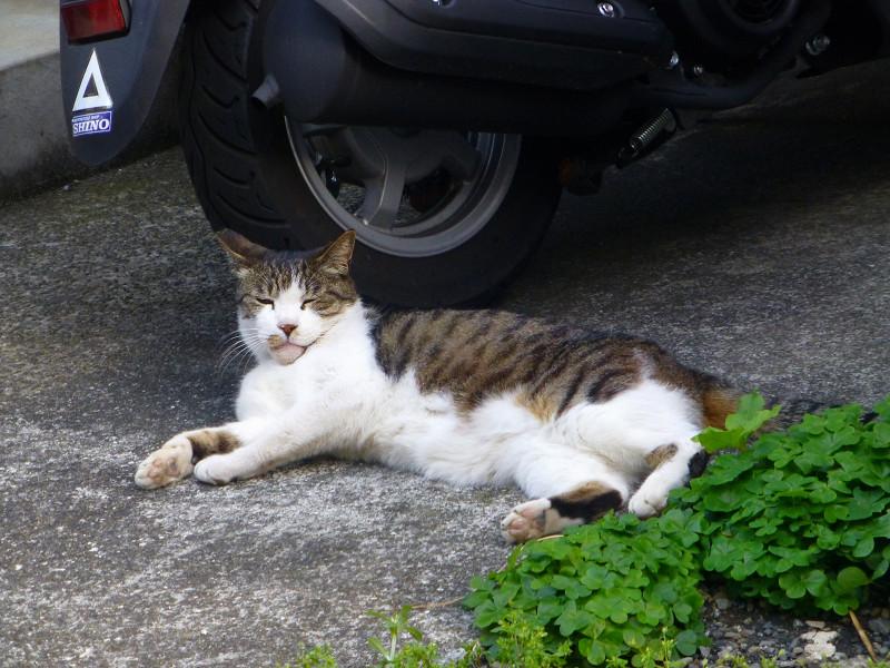 路地の猫たち3