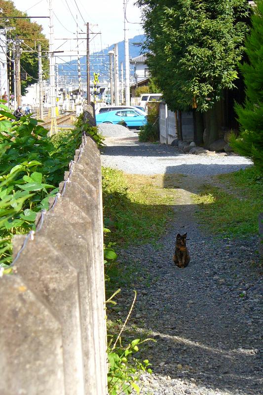 砂利路地のサビ柄猫1