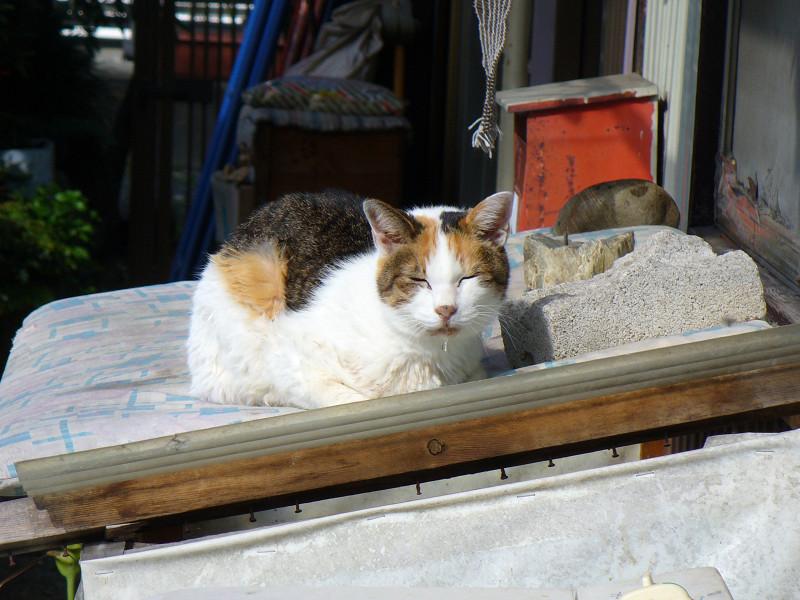 物置箱の三毛猫2
