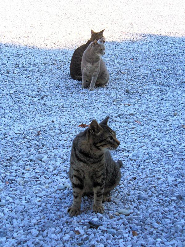 玉砂利と猫3匹1