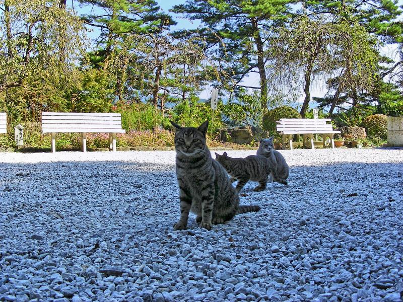 玉砂利と猫3匹2